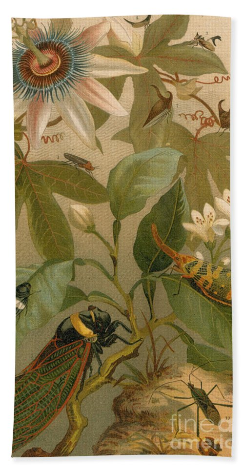 Animal Hand Towel featuring the photograph Clematis Cicada And Beetles 1894 by NYPL Photo Researchers