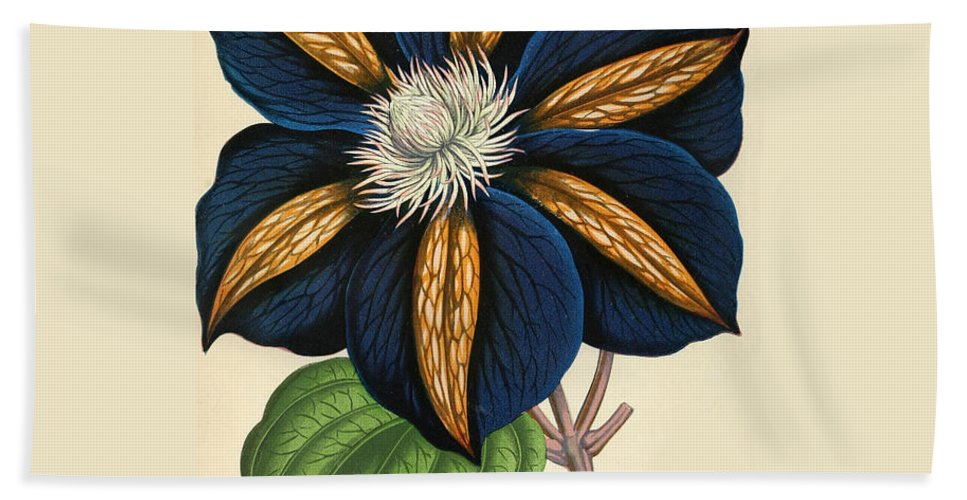 Clematis Hand Towel featuring the painting Clematis Star Of India by Philip Ralley