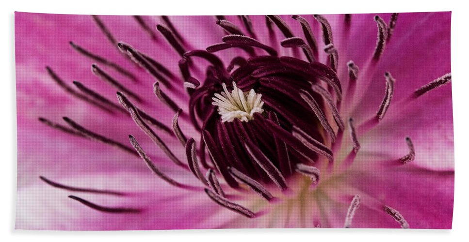Clematis Bath Sheet featuring the photograph Clematis Up Close by Robert Woodward