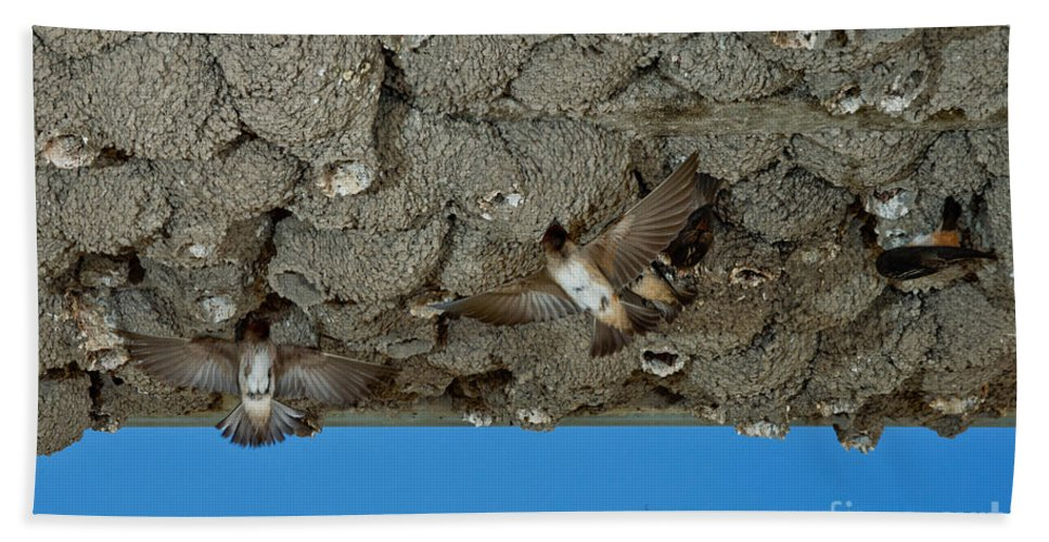Animal Hand Towel featuring the photograph Cliff Swallows At Nests by Anthony Mercieca