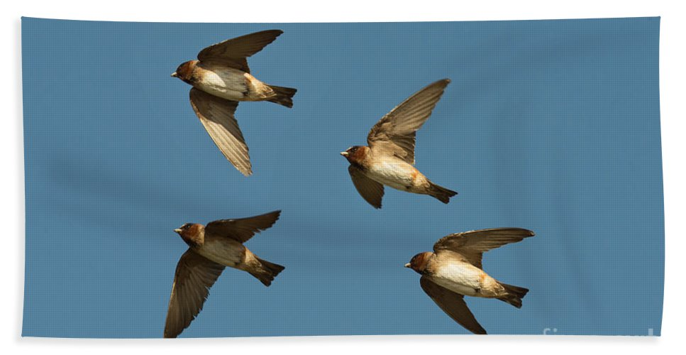 Animal Hand Towel featuring the photograph Cliff Swallows Flying by Anthony Mercieca