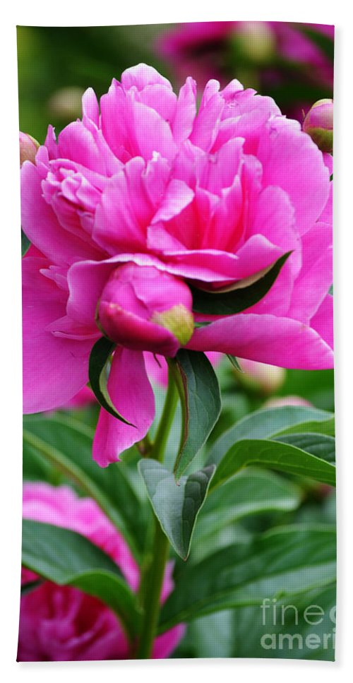 Inflorescence Hand Towel featuring the photograph Close Up Flower Blooming by Lj Lambert