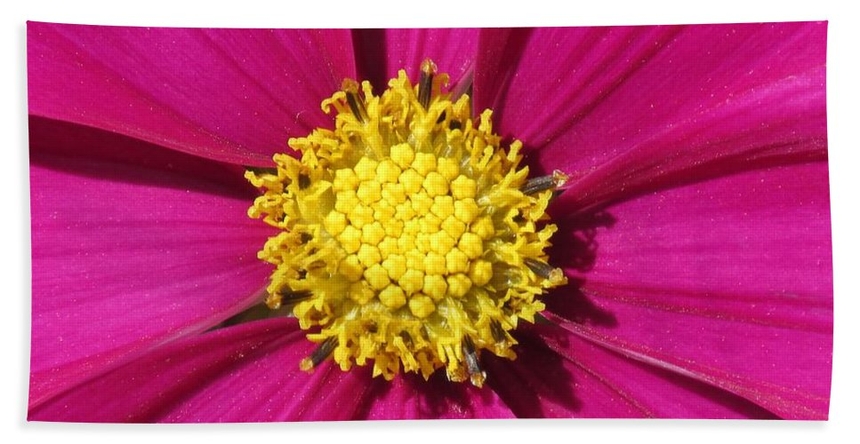 Garden Bath Sheet featuring the photograph Close Up Of A Cosmos Flower by Lynne Miller