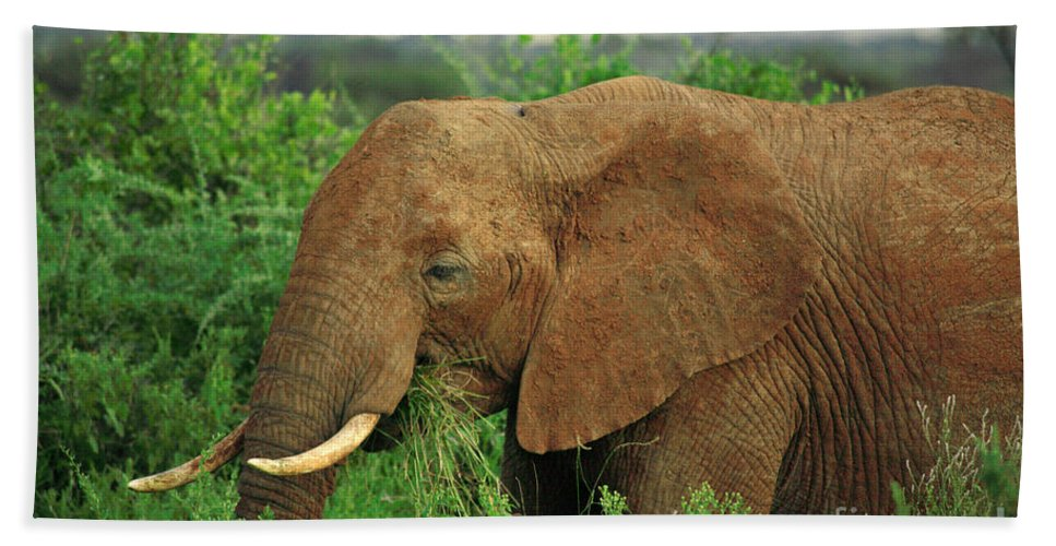 Africa Bath Sheet featuring the photograph Close Up Of African Elephant by Deborah Benbrook