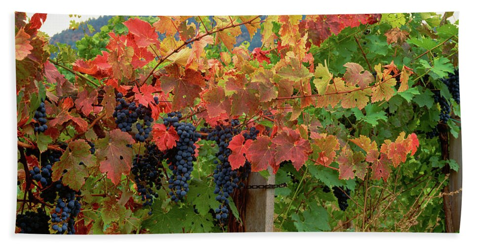 Photography Bath Sheet featuring the photograph Close-up Of Cabernet Sauvignon Grapes by Panoramic Images