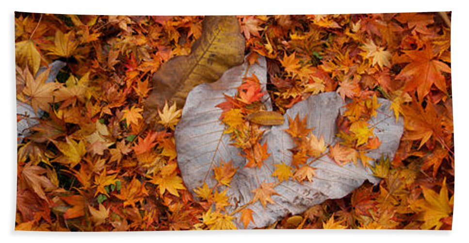 Photography Hand Towel featuring the photograph Close-up Of Fallen Maple Leaves by Panoramic Images