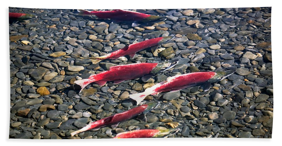 Photography Hand Towel featuring the photograph Close-up Of Fish In Water, Sockeye by Panoramic Images