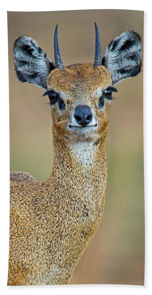 Photography Hand Towel featuring the photograph Close-up Of Klipspringer Oreotragus by Panoramic Images