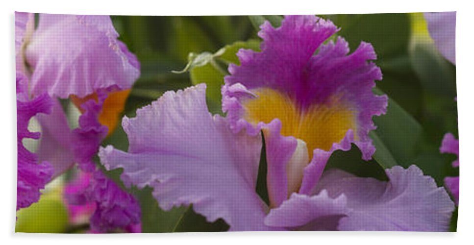 Photography Hand Towel featuring the photograph Close-up Of Purple Orchid Flowers by Panoramic Images