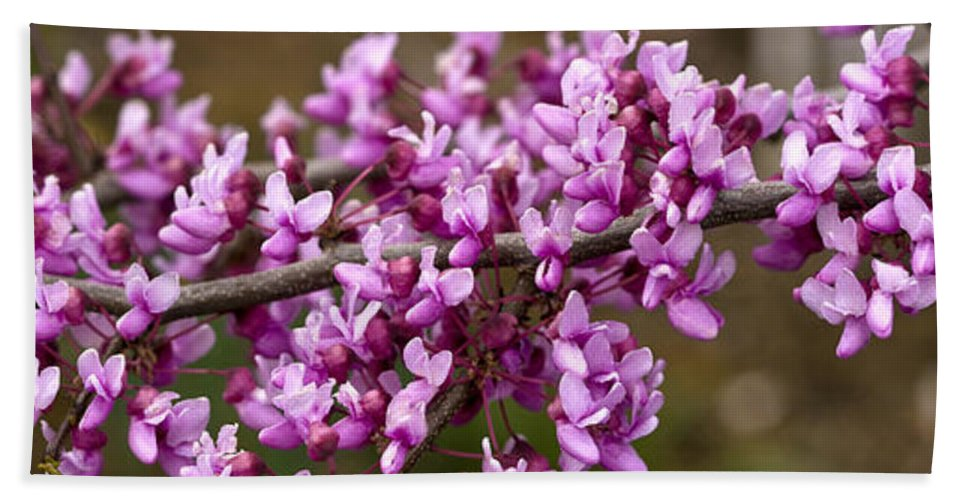 Photography Hand Towel featuring the photograph Close-up Of Redbud Tree Blossoms by Panoramic Images