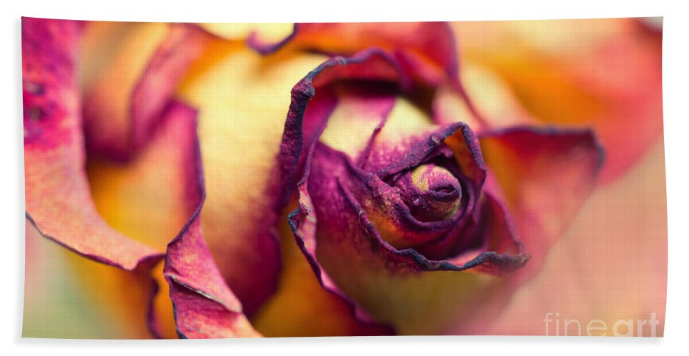 Flower Hand Towel featuring the photograph Close Up Of The Dry Rose by Jaroslaw Blaminsky