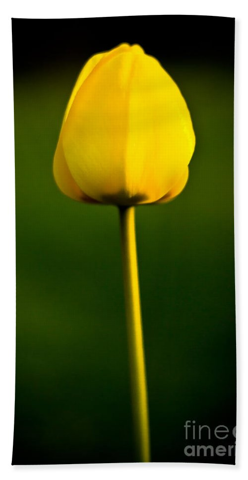 Floral Hand Towel featuring the photograph Closed Yellow Flower by John Wadleigh