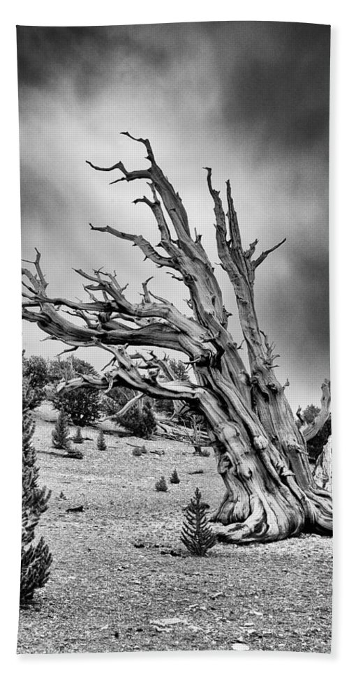 Tree Sky Cloudy Storm Summer Scenic Landscape Nature eastern Sierra Mountains Ancient Forest California black And White Bath Sheet featuring the photograph Closing In by Cat Connor