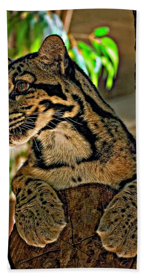 Clouded Leopard Hand Towel featuring the photograph Clouded Leopard by Steve Harrington