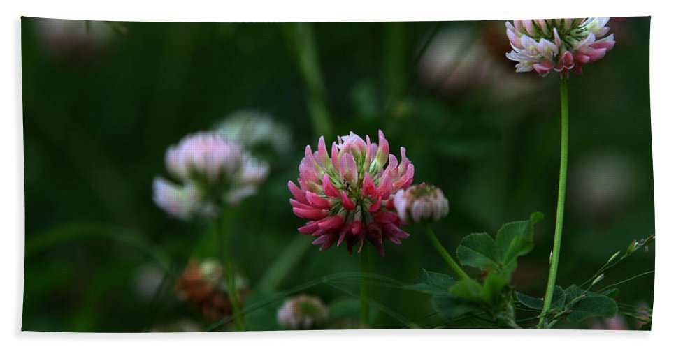 Clover Hand Towel featuring the photograph Clover by Dee Carpenter
