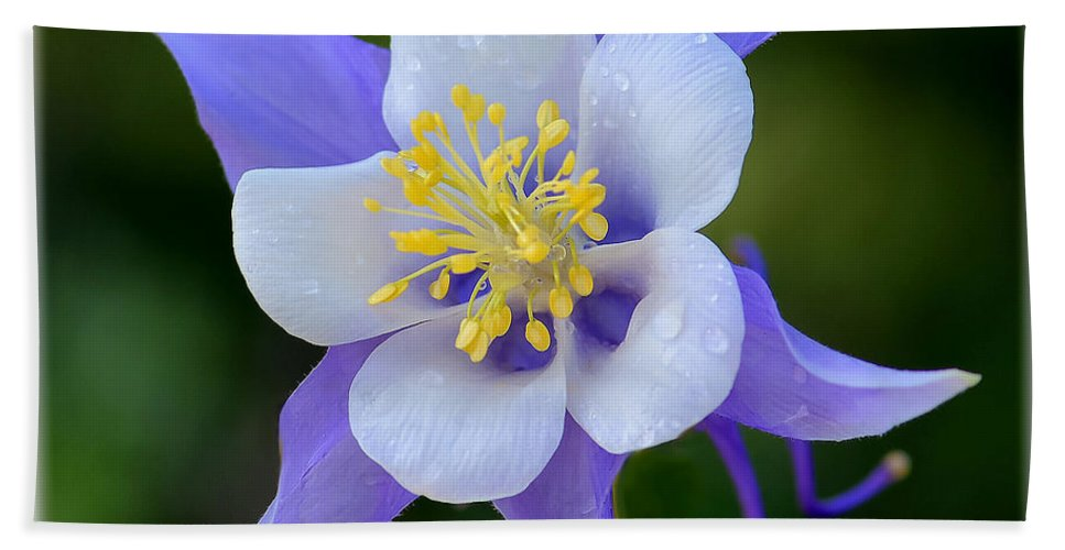 Flower Hand Towel featuring the photograph Clumbine by Lena Owens OLena Art