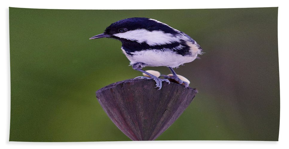Coal Tit Hand Towel featuring the photograph Coal Tit The King by Jouko Lehto