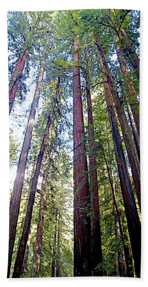 Coastal Redwoods Reach For The Sky In Armstrong Redwoods State Preserve Near Guerneville Hand Towel featuring the photograph Coastal Redwoods Reach For The Sky In Armstrong Redwoods State Preserve Near Guerneville-ca by Ruth Hager