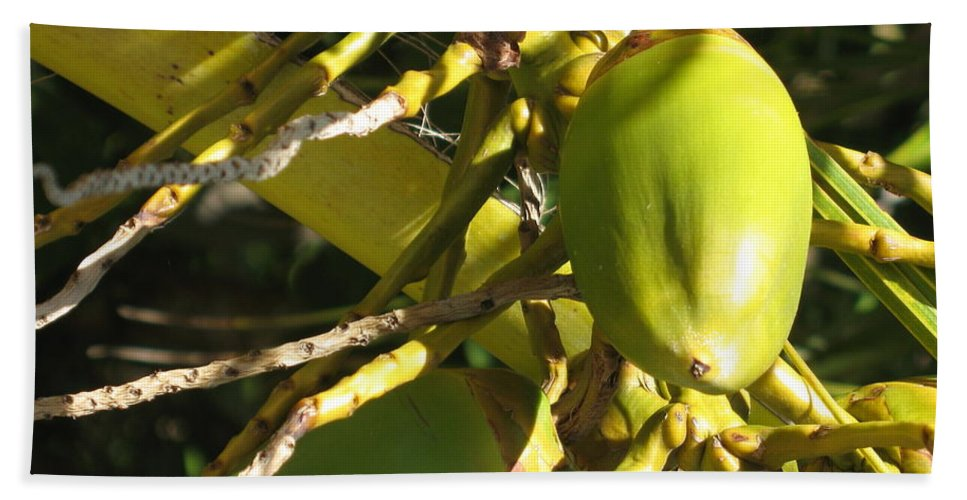 Coconut Hand Towel featuring the photograph Coconut by Christiane Schulze Art And Photography