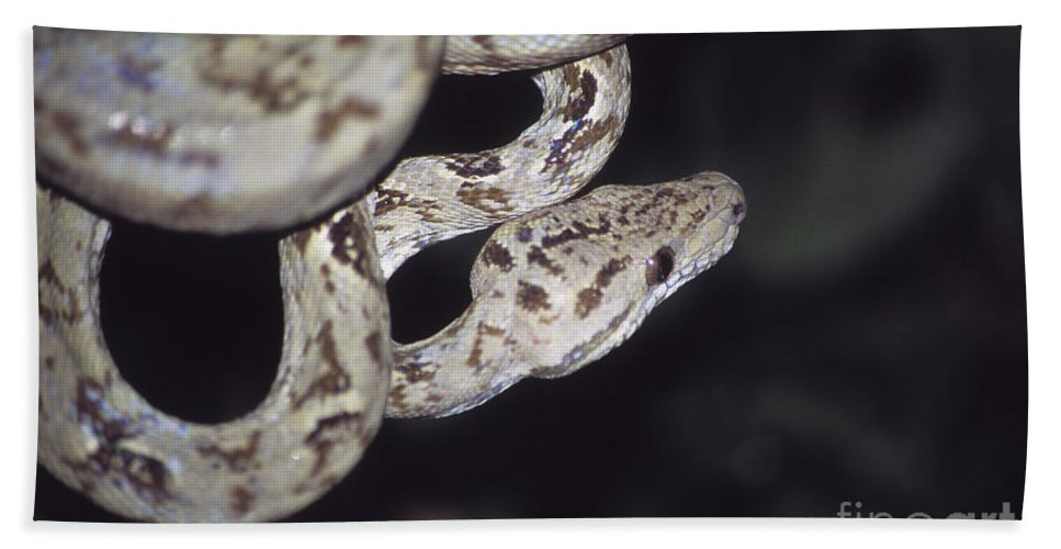 Snake Hand Towel featuring the photograph Coiled And Waiting by James Brunker