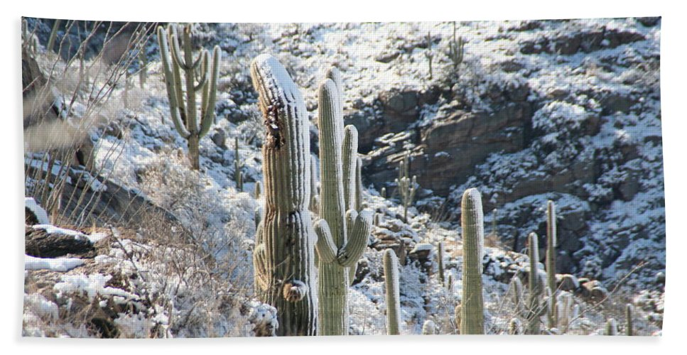 David S Reynolds Hand Towel featuring the photograph Cold Saguaros by David S Reynolds