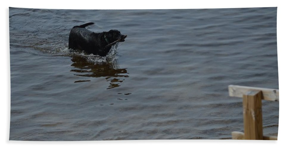 Great Lakes Hand Towel featuring the photograph Cold Water Fetch by Linda Kerkau
