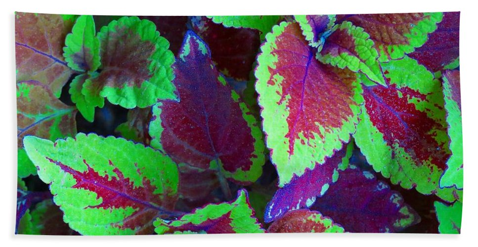 Hand Towel featuring the photograph Coleus Color by MTBobbins Photography