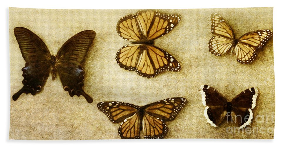 Butterfly; Butterflies; Multiple; Colorful; Nature; Insect; Dead; Display; Wings; Background; Delicate; Fragile; Moth; Monarch; Science; Texture Hand Towel featuring the photograph Collection by Margie Hurwich