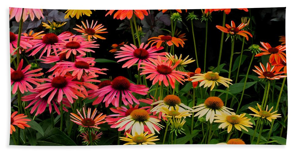 Coneflower Bath Sheet featuring the photograph Coloratura by Barbara McMahon