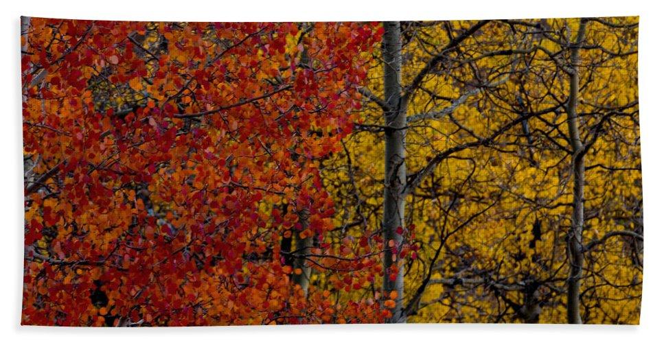 Autumn Bath Sheet featuring the photograph Color Changes by Ernie Echols
