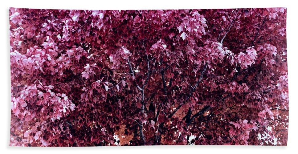Autumn Hand Towel featuring the photograph Color In The Tree 01 by Thomas Woolworth