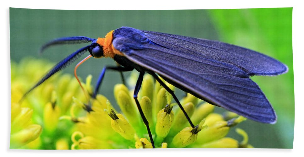 Bugs Hand Towel featuring the photograph Color Me Blue by Geoff Crego