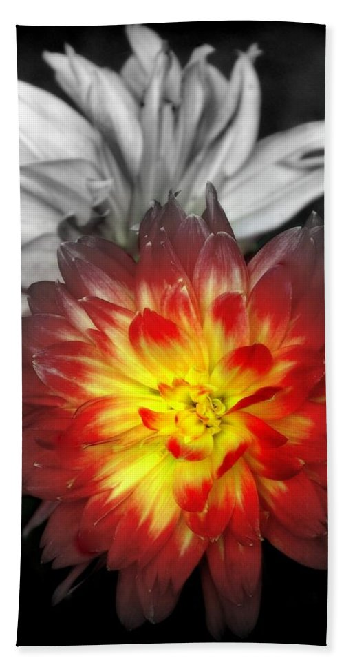 Dahlias Hand Towel featuring the photograph Color Of Life by Karen Wiles