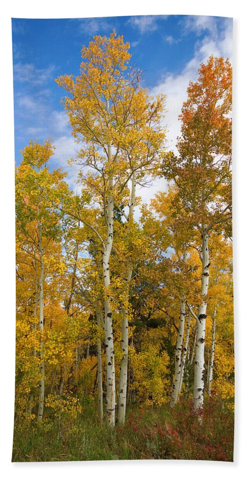 Colorful Hand Towel featuring the photograph Colorado Autumn Aspens by James BO Insogna
