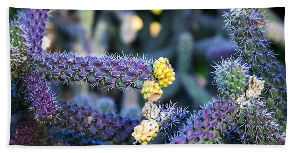 Cactus Photographs Bath Sheet featuring the photograph Colorful Cactus Red Purple Green Yellow Plant Fine Art Photography Print by Jerry Cowart