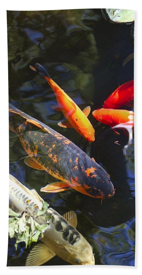 Cyprinus Carpio Haematopterus Bath Sheet featuring the photograph Colorful Koi by Kathy Clark