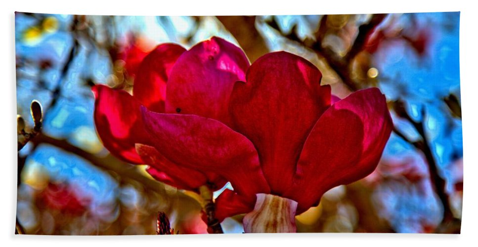 Magnolia Hand Towel featuring the photograph Colorful Magnolia Blossom by Scott Hill