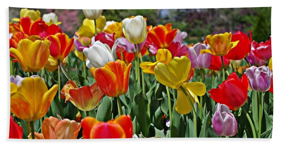 Colorful Tulips Bath Sheet featuring the photograph Colorful Tulips by Sharon Popek
