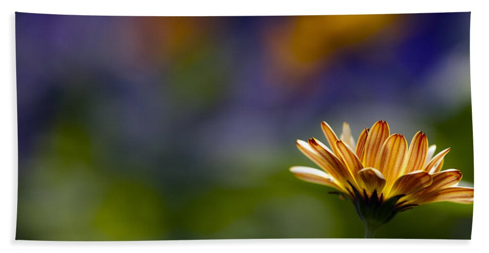 Daisy Bath Sheet featuring the photograph Colorfully Soft by Edward Kreis