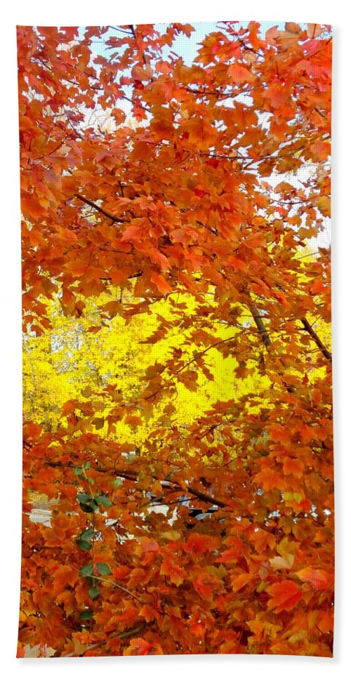 Trees Hand Towel featuring the photograph Colors Of Fall 2 by Deborah Crew-Johnson