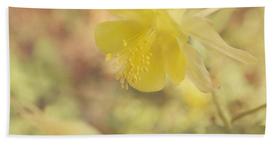 Yellow Flower Bath Sheet featuring the photograph Columbine Flower by Kim Hojnacki