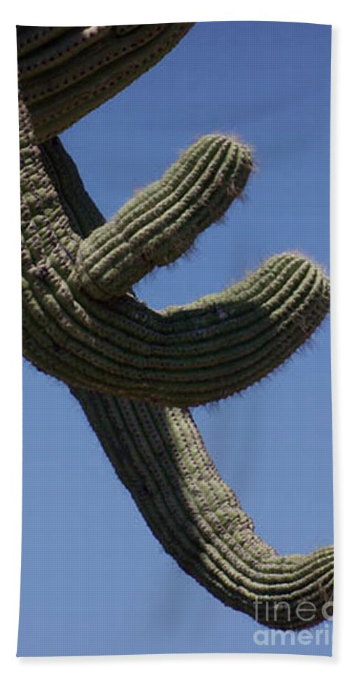 Saguaro Hand Towel featuring the photograph Come Hither by Kathy McClure