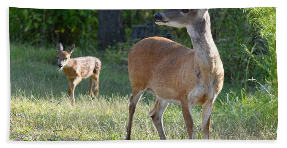 Deer Hand Towel featuring the photograph Come On My Babe by Barb Dalton