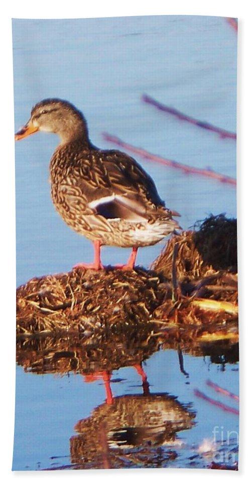 Comedian Bath Sheet featuring the photograph Comedian Duck by Eric Schiabor