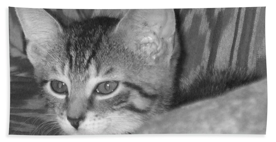 Kitten Hand Towel featuring the photograph Comfy Kitten by Pharris Art