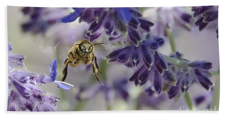 Bee Hand Towel featuring the photograph Coming In For A Landing by Dianne Phelps