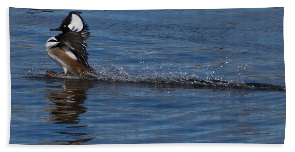 Hooded Merganser Bath Sheet featuring the photograph Coming In Too Hot by Ernie Echols
