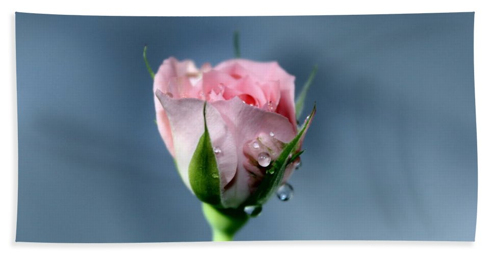 Rose Hand Towel featuring the photograph Coming To Life by Krissy Katsimbras