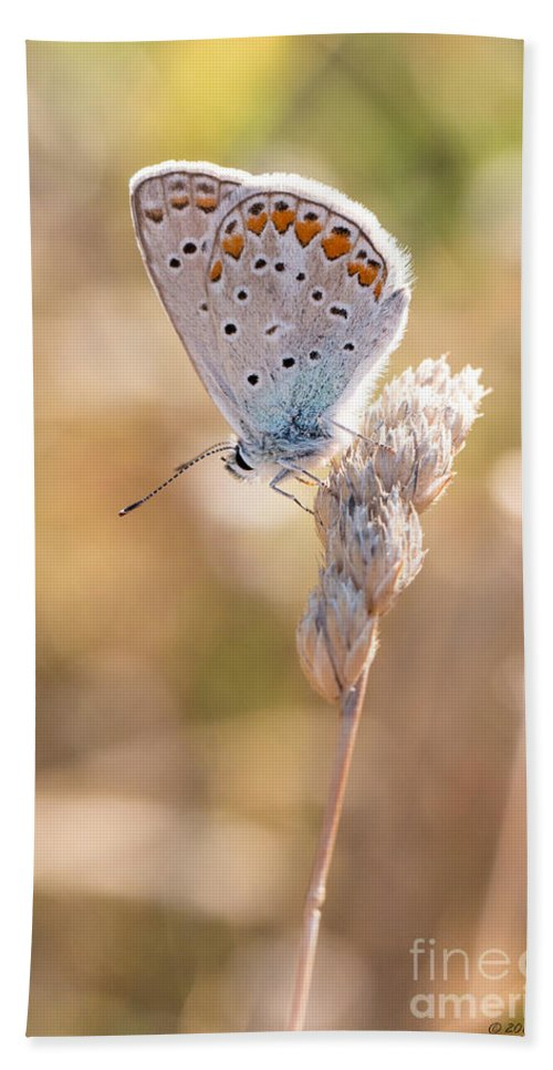 Common Blue Butterfly Bath Sheet featuring the photograph Common Blue Butterfly by Jivko Nakev
