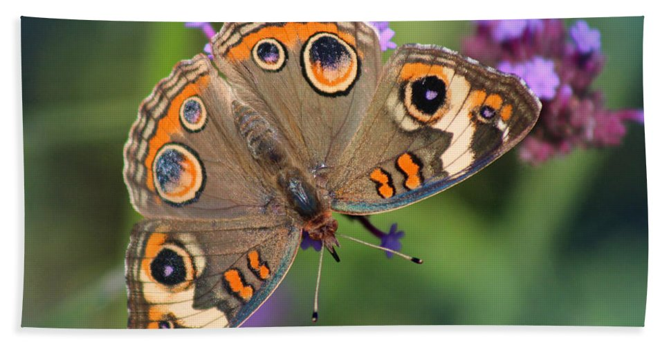 Buckeye Butterfly Hand Towel featuring the photograph Common Buckeye Butterfly by Karen Adams
